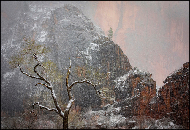 005 - Zion National Park_Winter Wonderland
